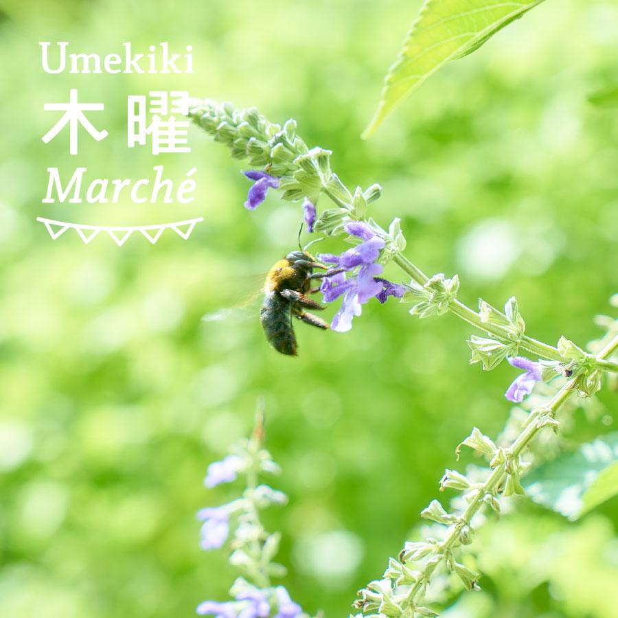 Umekiki 木曜 マルシェ -1月26日-