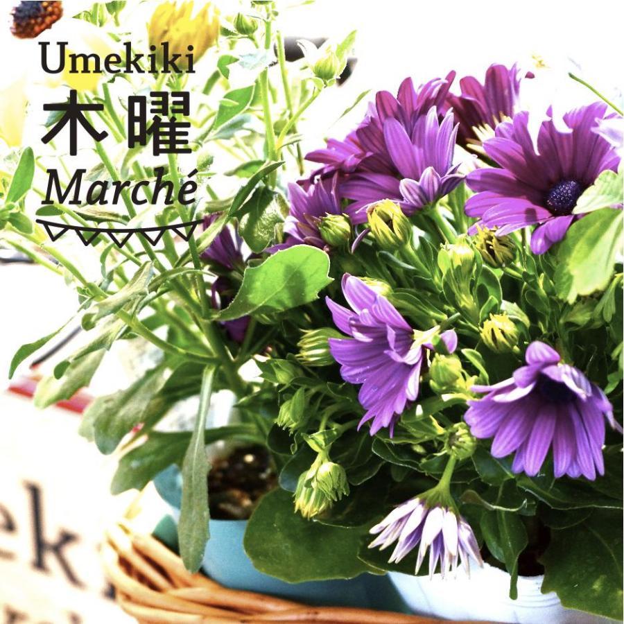 Umekiki 木曜 マルシェ -4月9日-