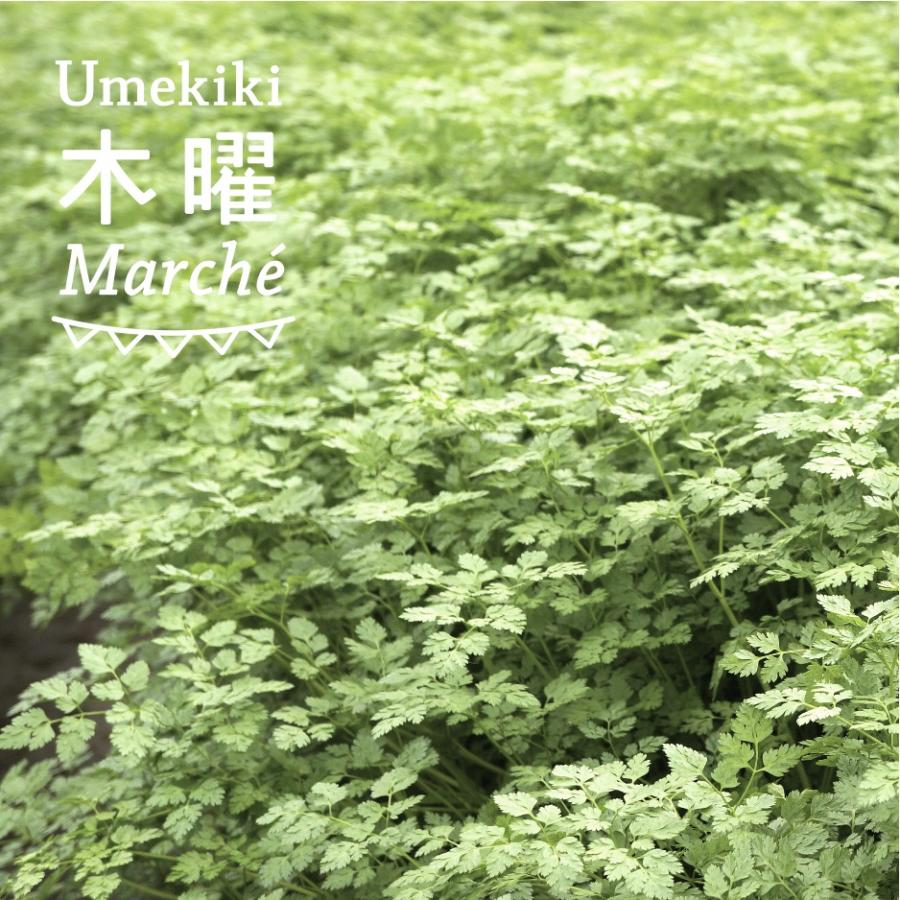 Umekiki 木曜 マルシェ -4月23日-