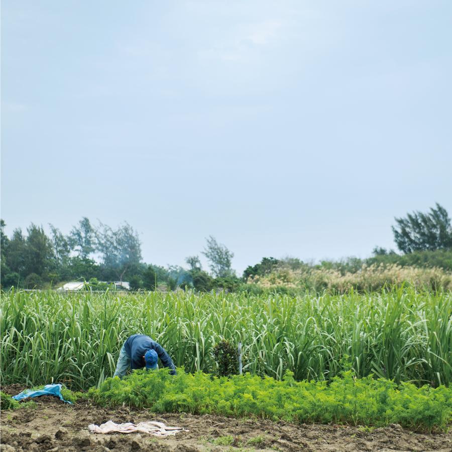 沖縄の厳しい気候と豊かな土壌