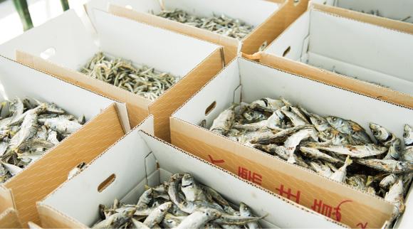 長崎の煮干しはカタクチイワシが主流であり、サイズによってチリメン、カエリ、小羽、中羽、大羽などと呼び方が異なる。
